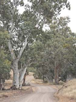 Moralana Drive Nov 2014 (In the Flinders Ranges)