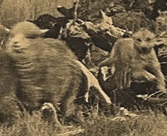 Wild Dogs, adapted from an ABC file photo
