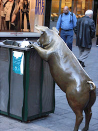 Brass Pig looking in a bin